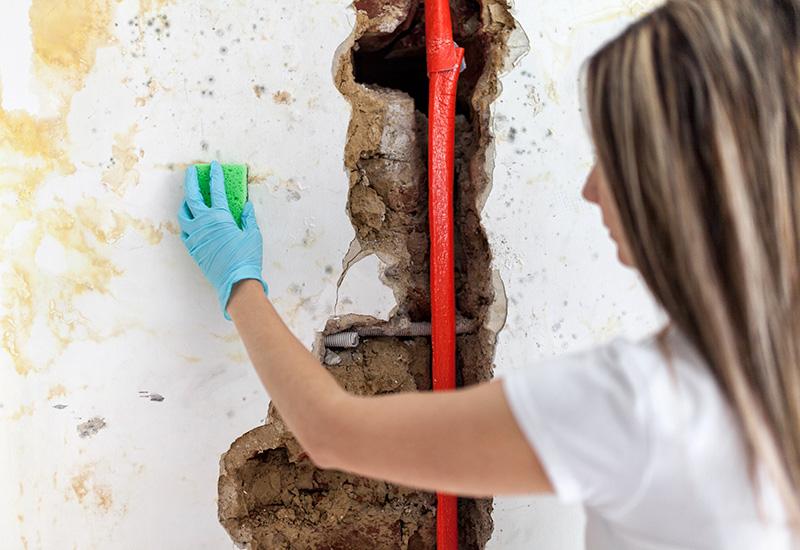 Limpieza de hongos peligrosos de una pared húmeda después de la fuga de la tubería de agua