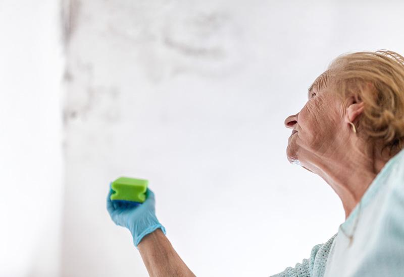 Limpieza de hongos peligrosos de una pared húmeda después de una fuga de agua (2)
